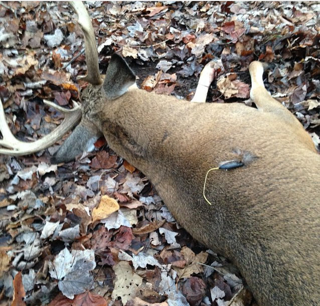 Wounded deer found using the Pro-Tracker system.