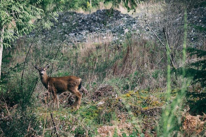 tracking-deer